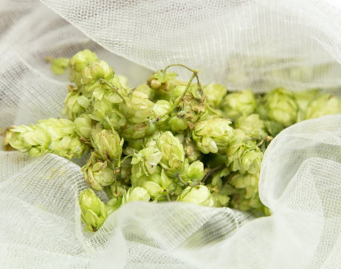 We need your wild hops!